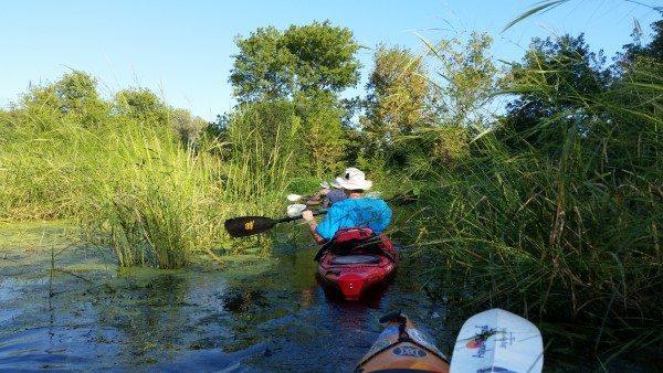 Turtle Creek Wildlife Area 9-5-16 (4) (Custom)